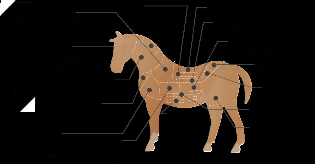 馬肉の部位の説明