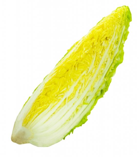 白菜1/4カット